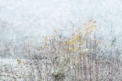 Snowfall holiday winter landscape with thin bushes of trees in t royalty free stock images