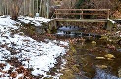 Snowfall i parkera Royaltyfri Bild