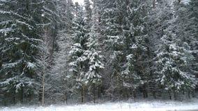Snowfall i skogen arkivfoton