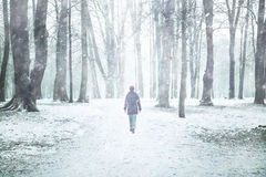 Snowfall In Park With Lonely Walking Woman Stock Photography