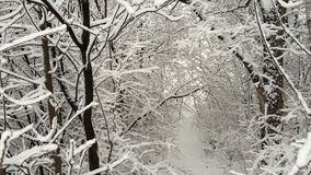 Snowfall. Large flakes of snow slowly falling down. stock footage