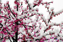 Snowfall on the LED artificial light tree Stock Images