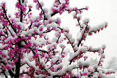 Snowfall on the LED artificial light tree Royalty Free Stock Image