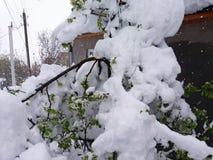 Snowfall. a lot of snow over the tree stock photos