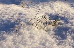 After snowfall Royalty Free Stock Image