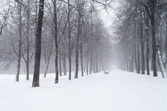 Snowfall in the morning on town alley Royalty Free Stock Image