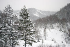 Snowfall in mountain. The Island Sakhalin. Royalty Free Stock Image