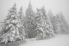 Snowfall in mountain winter forest Stock Images