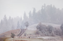 Snowfall in mountains. Change of seasons. Winter coming. Carpath Royalty Free Stock Photos