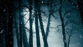 Snowfall in the night stock footage