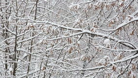 Snowfall over branches stock video
