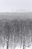 Snowfall over city park forest in winter Stock Images