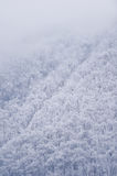 Snowfall over a pine tree forest Royalty Free Stock Photos