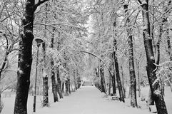 Snowfall in the park. Black and white Stock Image