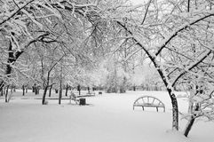 Snowfall in the park. Black and white Royalty Free Stock Photo