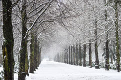 Snowfall in park Royalty Free Stock Images