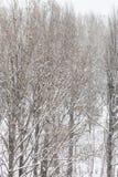 Snowfall in the park Stock Photos