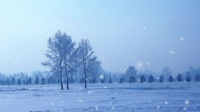 Snowfall in the Park at dawn.  stock video footage