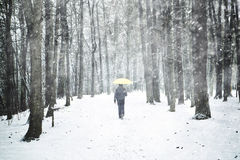 Snowfall in park with lonely walking man with umbrella Stock Photos