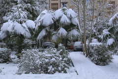 Snowfall in the park. Palm trees under snow in unusually cold weather. Snowfall in the park. palm trees covered by snow in december Stock Photography