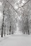 Snowfall in the park, snowy winter road, snow covered trees landscape. Bad weather concept. Snowfall in the park, snowy winter road, snow covered trees Stock Image
