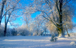 Snowfall. Winter landscape in the park. royalty free stock photography