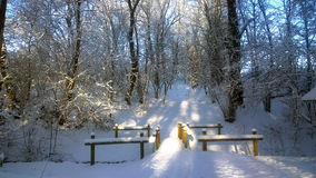 Snowfall. Winter landscape in the park. Royalty Free Stock Photo