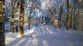 Snowfall stock images