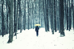 Snowfall in park with walking man with umbrella Royalty Free Stock Photography