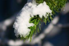 Snowfall on pine bough. A closeup of fresh, wet snow that has fallen on a green pine bough Stock Photography