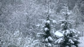 Snowfall quietly falls on branches of trees. Winter, slow motion stock video