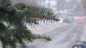 snowfall Rami dell'abete coperti di neve e di gocce L'automobile va sulla strada stock footage