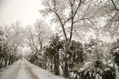 Snowfall Royalty Free Stock Image