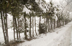Snowfall Stock Photo