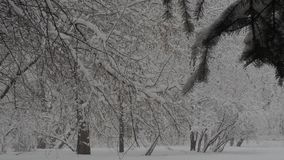 Snowfall. Snow clearance, christmas weather white year stock footage