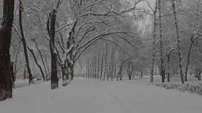 Snowfall. Snow clearance, christmas weather white year stock video