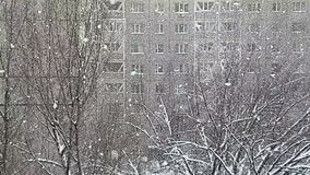 Snowfall. stock video