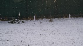 Snowfall at Snowy Lawn stock footage