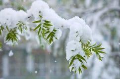 Snowfall in Spring Stock Photo