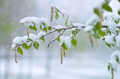 Snowfall in Spring Stock Image