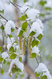Snowfall in Spring Royalty Free Stock Photography