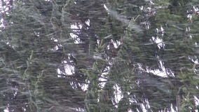 Snowfall storm in forest abstract  background stock footage
