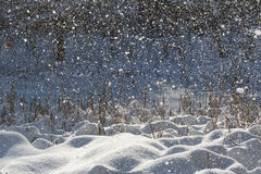 Snowfall and sunlight Stock Images