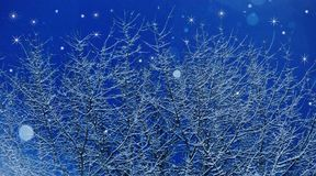 Snowfall. Tree branches covered with snow with stars and snowflakes twinkling in the background Royalty Free Stock Photography