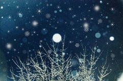 Snowfall. Tree branches covered with snow with stars and snowflakes twinkling in the background Royalty Free Stock Photos