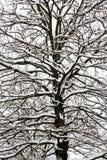 Snowfall Stock Photos