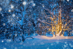Snowfall and Tree with garland warm lights in night snowy winter Royalty Free Stock Images
