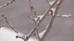 The Snowfall on the tree in Mt.Hakkoda,Aomori,Japan stock video