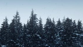 Snowfall On Tree Tops In Wilderness stock video