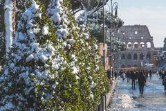 Trees on the Colosseum Approach. Snowfall on the trees approaching the Coliseum, a walkway paved with tourists and coffee shops Royalty Free Stock Photography
